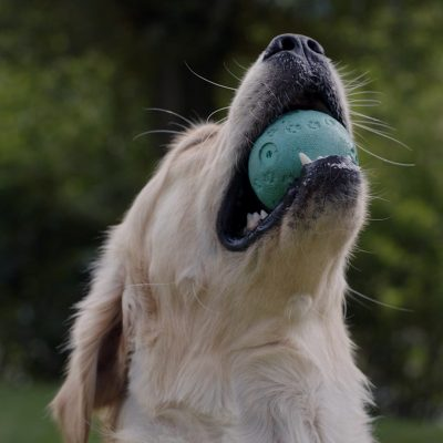 dog-with-ball@2x